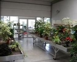 Tuincentrum Berckmoes - Binnenplanten