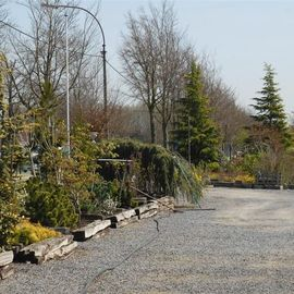 Tuincentrum Berckmoes BVBA   - Buitenplanten